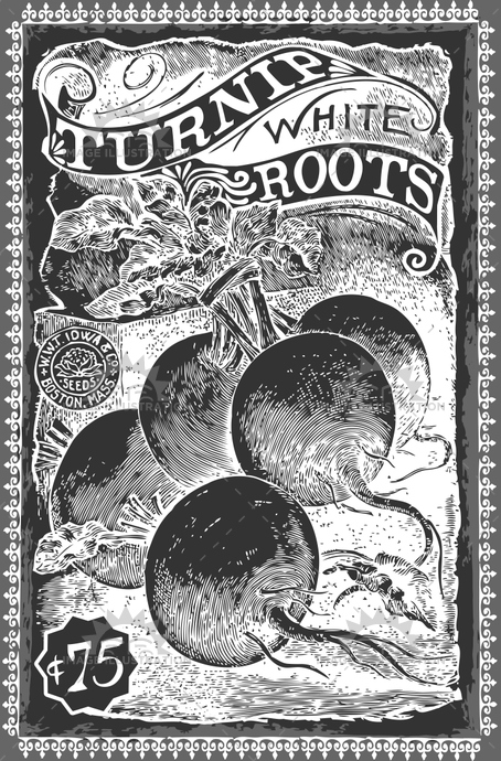 advertising, ancient, antique, art, background, blackboard, drawing, engraved, engraving, etching, food, greengrocery, healthy, illustration, isolated, market, nature, old, organic, radish, raw, retro, root, swede, turnip, vector, vegetable, vegetarian, vintage, white