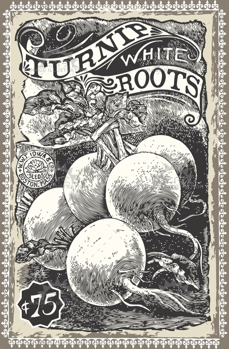 advertising, ancient, antique, art, background, drawing, engraved, engraving, etching, food, greengrocery, healthy, illustration, isolated, market, nature, old, organic, radish, raw, retro, root, swede, turnip, vector, vegetable, vegetarian, vintage, white